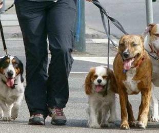 Paseador canino por horas