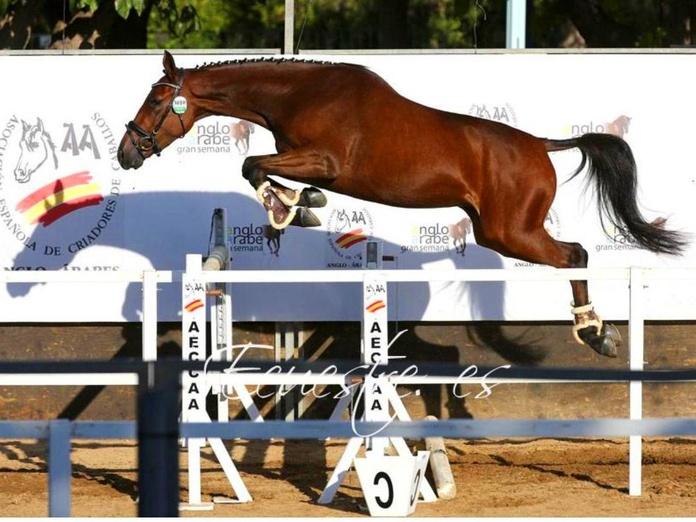 Entrenamiento de caballos: Servicios de Club Hípico Lira Cubero