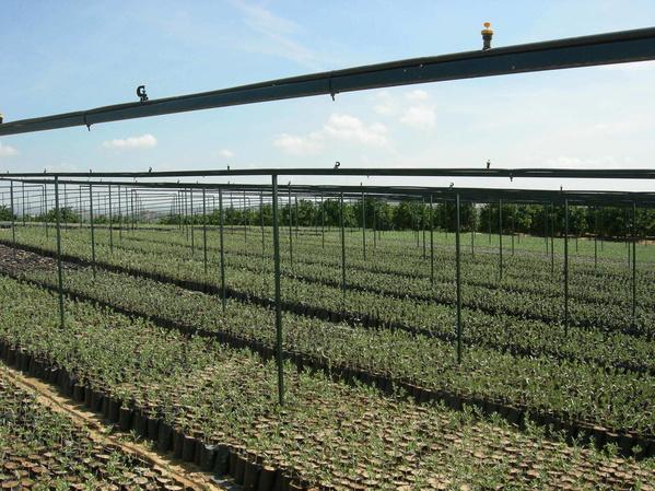 Lechín : Productos y servicios   de Vivero San Raimundo