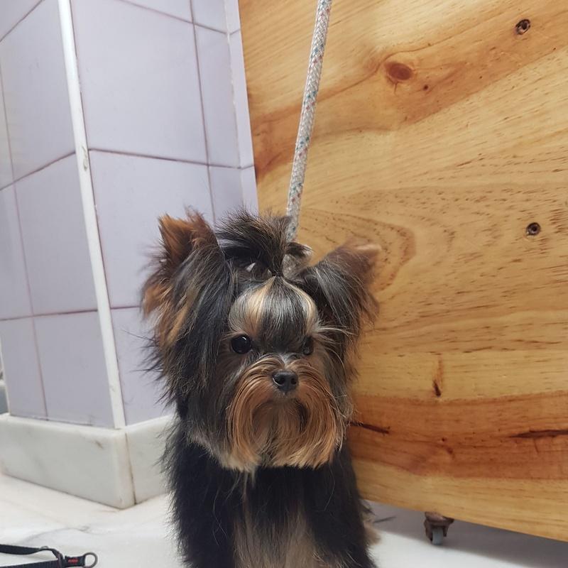 Peluquería: servicios de Itacan Peluquería Canina
