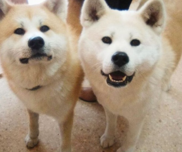 Peluquería canina y felina en Vilassar de Mar | Tot Pinso