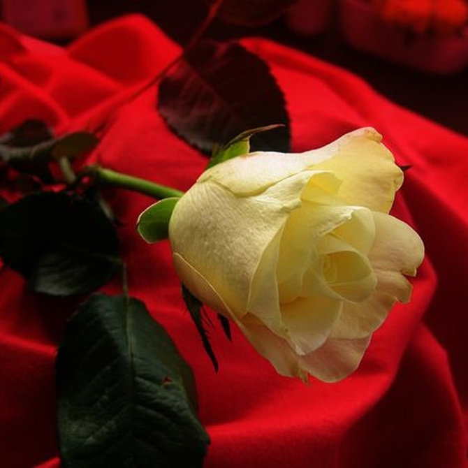 Flores para regalar por el día de los enamorados