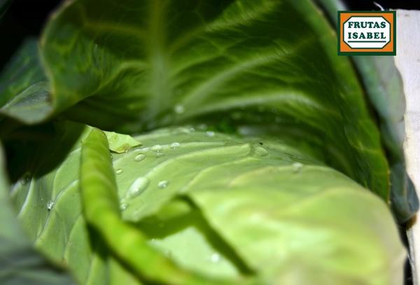 Repollo corazón de buey: Catálogo de Frutas Paula