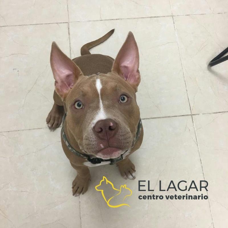 Alimentación: Tratamientos y especilidades de Centro veterinario El Lagar