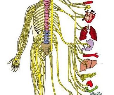 """""""La quiropráctica es la profesión de la salud que cuida del sistema nervioso"""""""