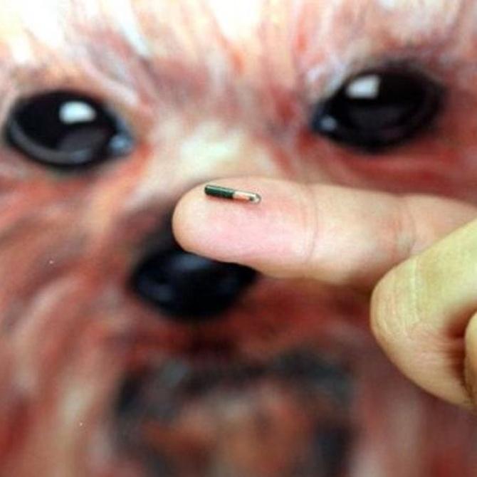 La importancia del microchip de las mascotas