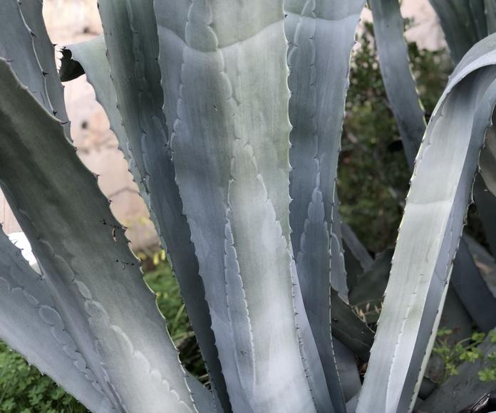 Cultivo de plantas: Servicios de Garden Home Mallorca