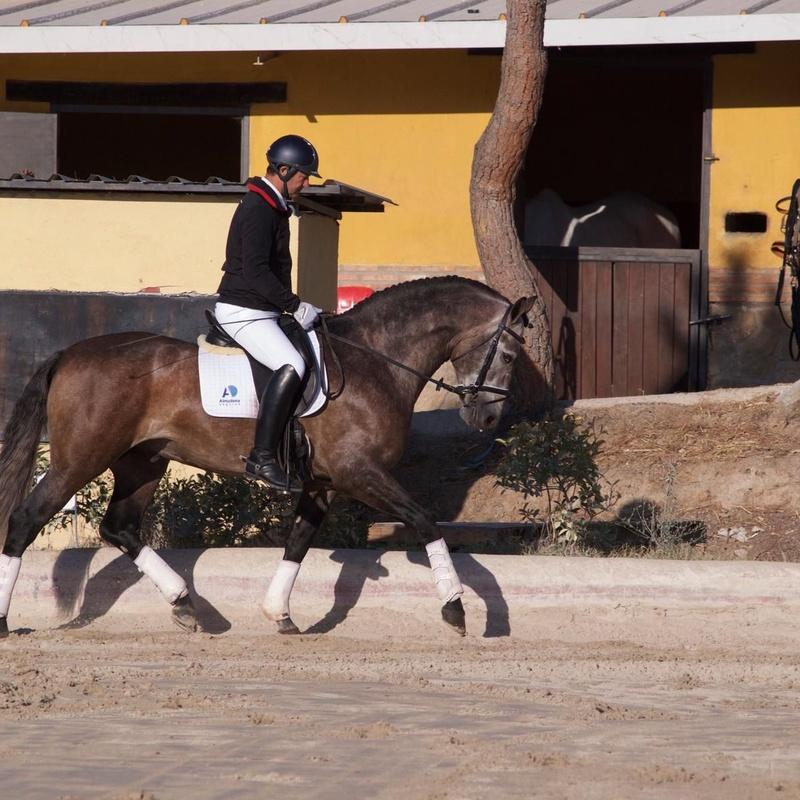 Doma y preparación de caballos: Servicios de Hípica Sol y Luna