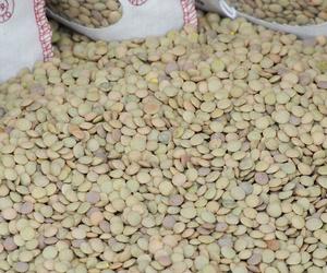 Todos los productos y servicios de Cereales y legumbres: Moraña Natural