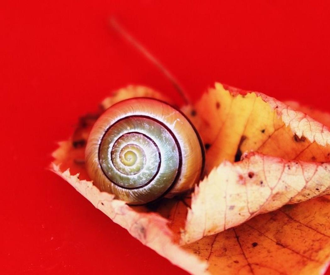 Conoce las propiedades de los caracoles para la salud
