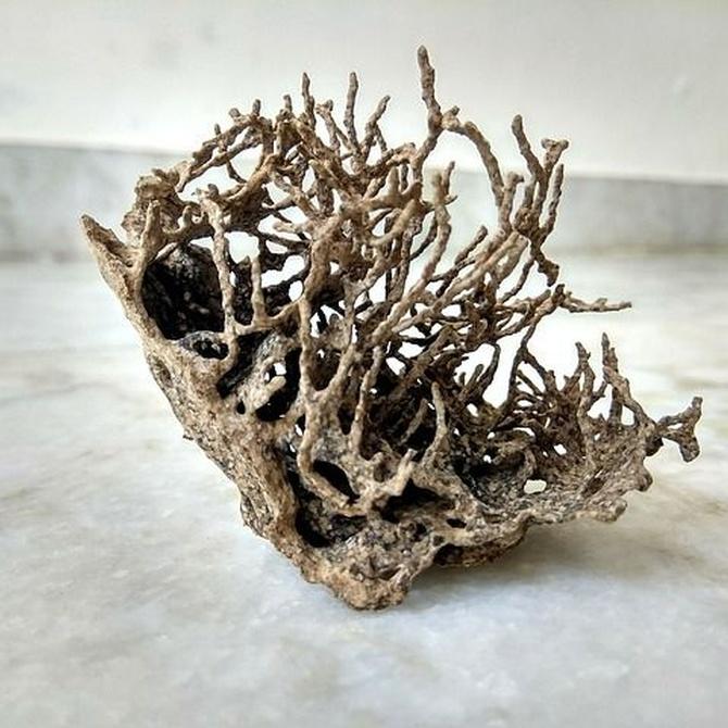 Diferencia entre termitas de madera seca y subterráneas