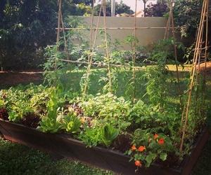 Fertilizantes, sustratos, insecticidas y semillas en Jaén