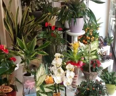 San Isidro José, floristas en Ciudad Lineal