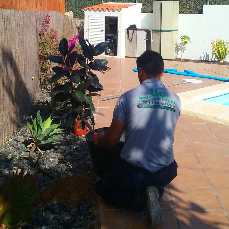 Otros servicios básicos: Servicios de limpieza de TLC Servicios