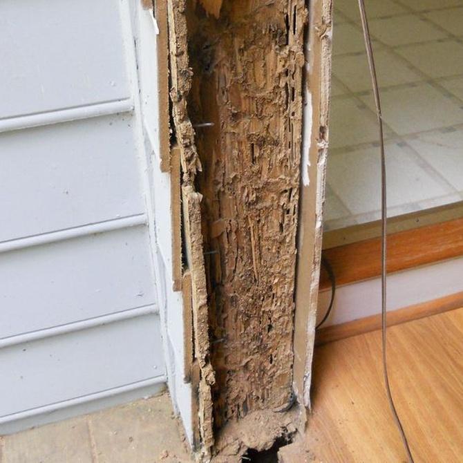 Principales riesgos de la presencia de termitas en viviendas