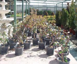 Creación de jardines en Madrid