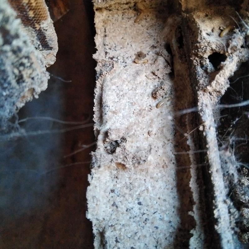 Termitas en ventana