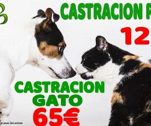 CASTRACION PERRO Y GATO PRECIO DE CAMPAÑA TODO EL AÑO