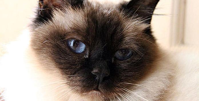 Vacunación de gatos