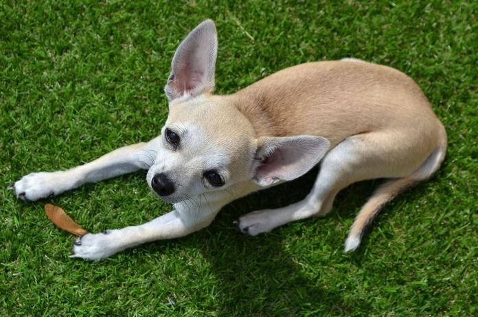 Peluqueria canina Oviedo