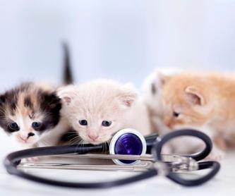 Diagnóstico por imagen: Servicios de Clínica Veterinaria Parque Aluche