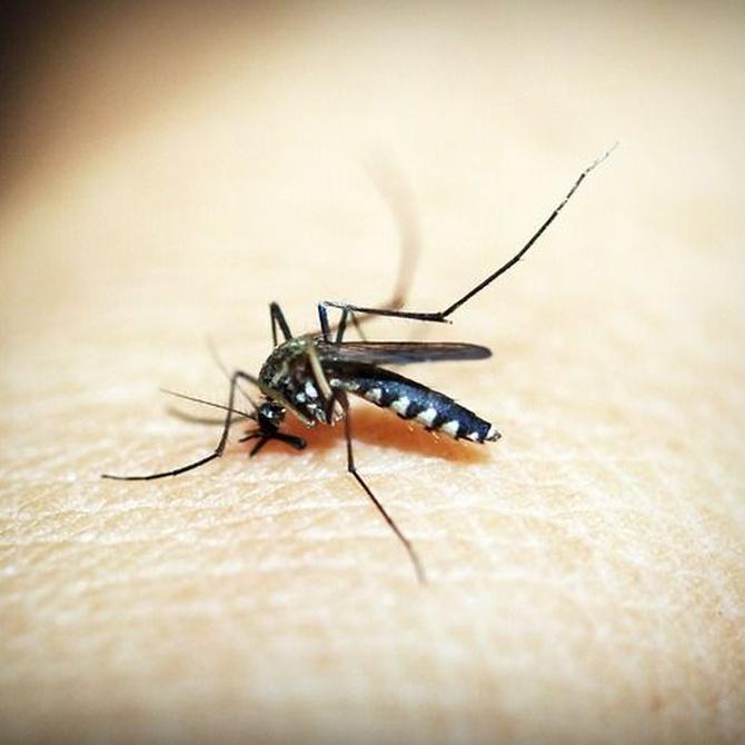 Por qué pican los mosquitos y otras preguntas con respuesta