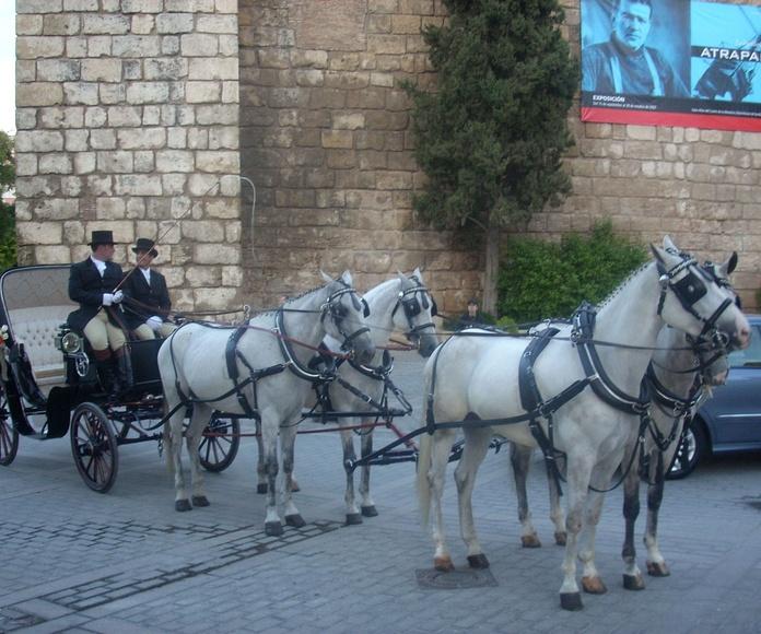 Servicio de bodas: Servicios que prestamos de JV Tours Sevilla