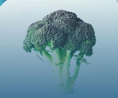 Los portentosos beneficios del brócoli: regenera tu cerebro con medicina natural