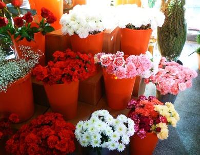 Flores frescas todos los dias