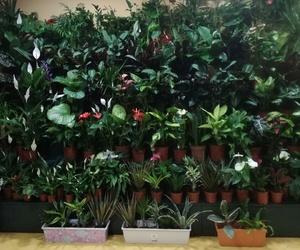 Venta de plantas en A Coruña