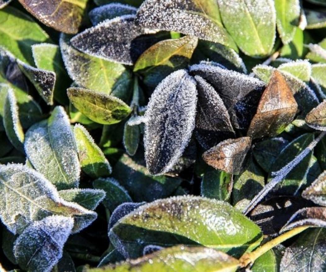 Consejos para proteger tus plantas del frío