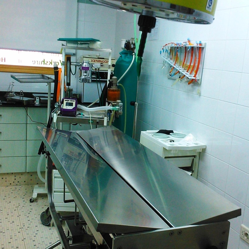 clinica veterinaria - cirugía en Almassora - Castellón