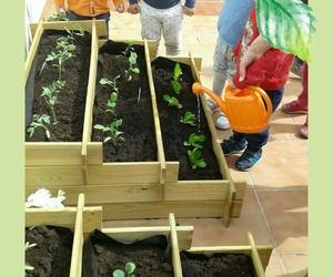 Programa: cuidamos el medio ambiente