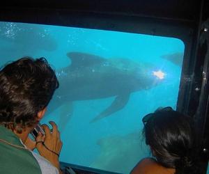 Visión submarina de Ballenas en Tarifa