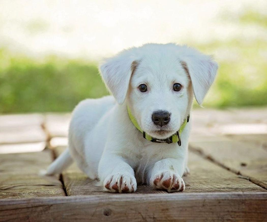 ¿Es obligatorio vacunar a los cachorros?