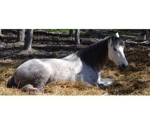 Acercamiento al caballo