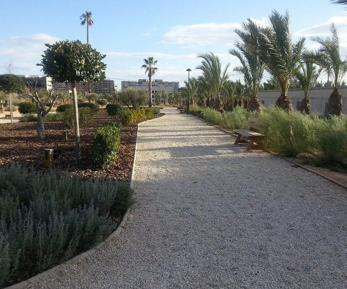 Limpieza de palmeras y cepillado de tronco: Servicios de Mantenimientos y Jardinería La Jara