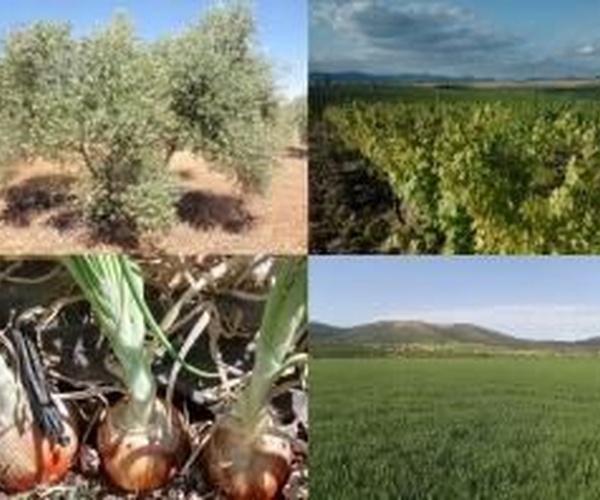 Asesoramiento técnico de cultivos Ciudad Real