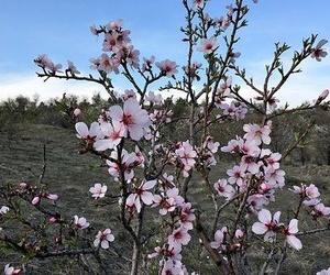Consejos para la Primavera
