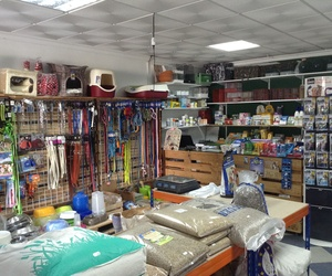 Accessories for your pet in Vera