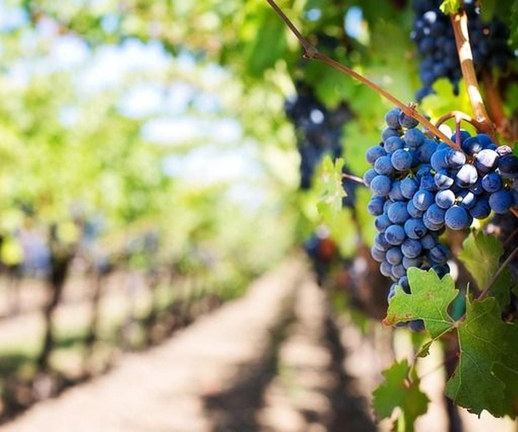 ¿Cuál es el origen del vino?