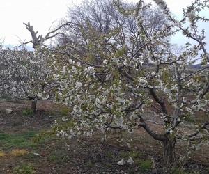 Galería de Asesores agrarios en El Burgo de Ebro   Asesores Agrarios Rifaterra