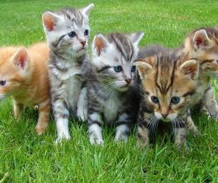 Principales urgencias veterinarias en los gatos