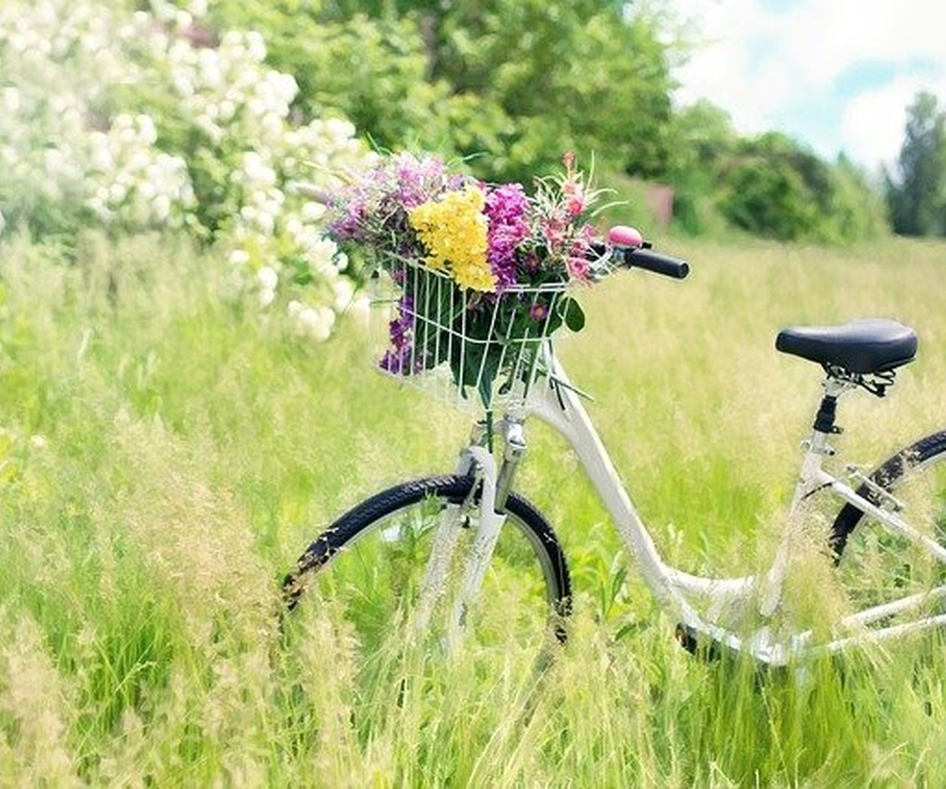 Bicicletas, las mejores compañeras para todo autocaravanista