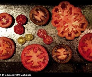 Devolver el sabor a los tomates