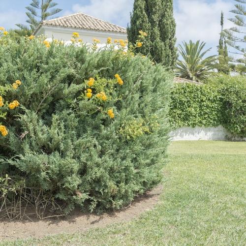 Mantenimiento de jardines de urbanizaciones en Chiclana de la Frontera