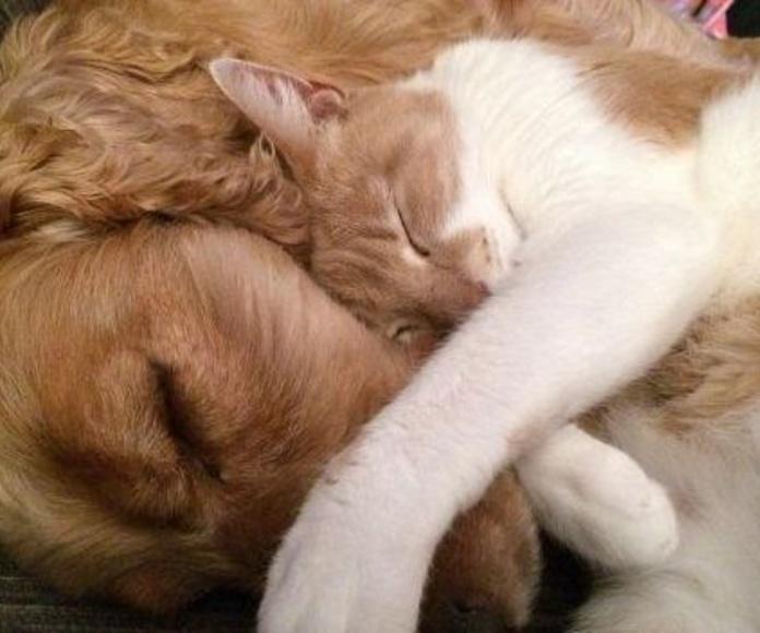Dietas caninas y felinas