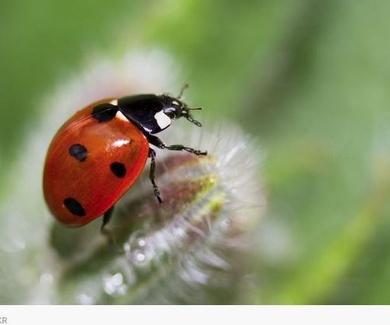 Los insectos toman las ciudades gracias al confinamiento