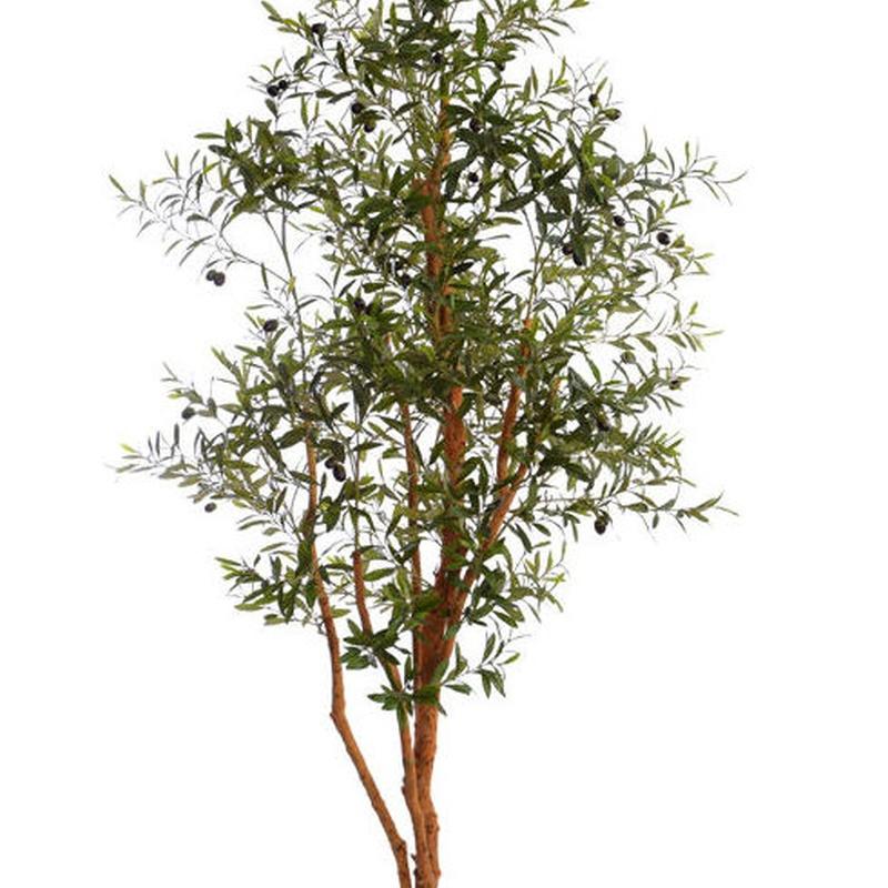 Árbol de olivo. 1,80 m.