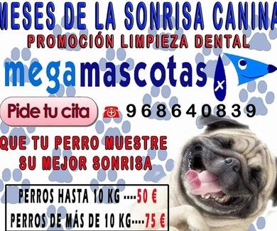 Mes de la sonrisa canina . Promoción limpieza dental en Murcia